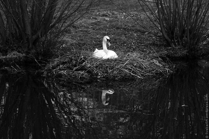 liveberlin-0220-monochrome-madam-swan